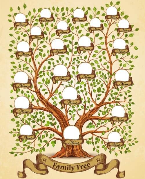 Family tree material
