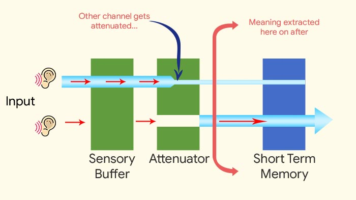 Selective attention Treisman's Attenuation Theory